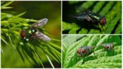 Зеленая муха
