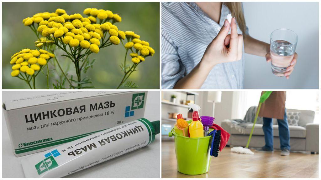 Лечение глистов в домашних условиях