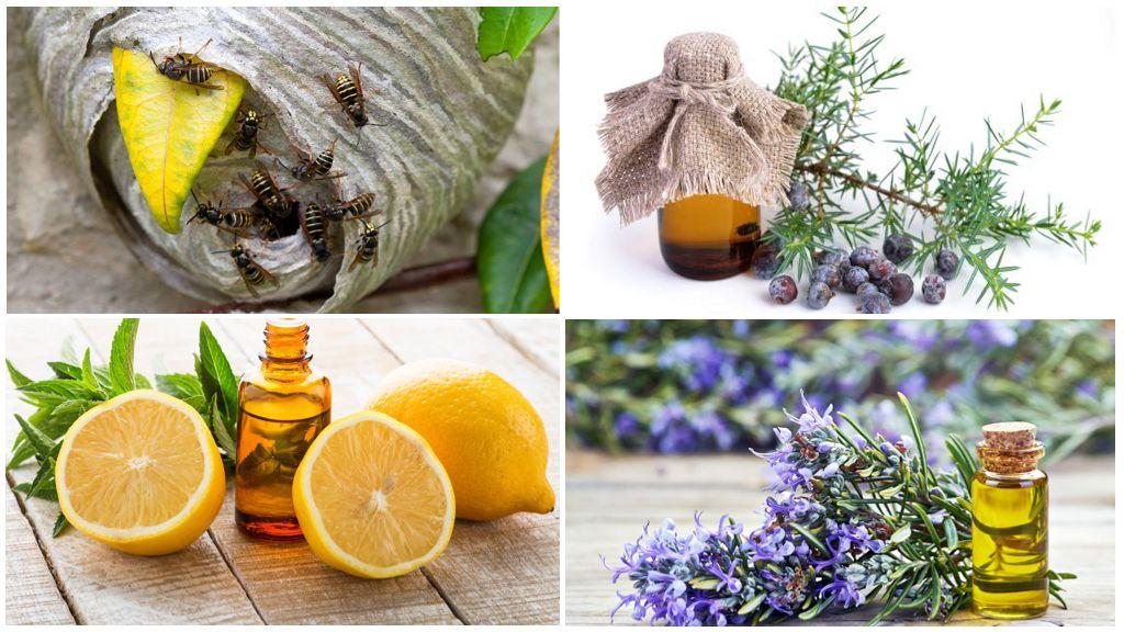 Эфирные масла для борьбы с осами