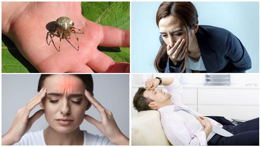Аллергия на укус паука крестовика