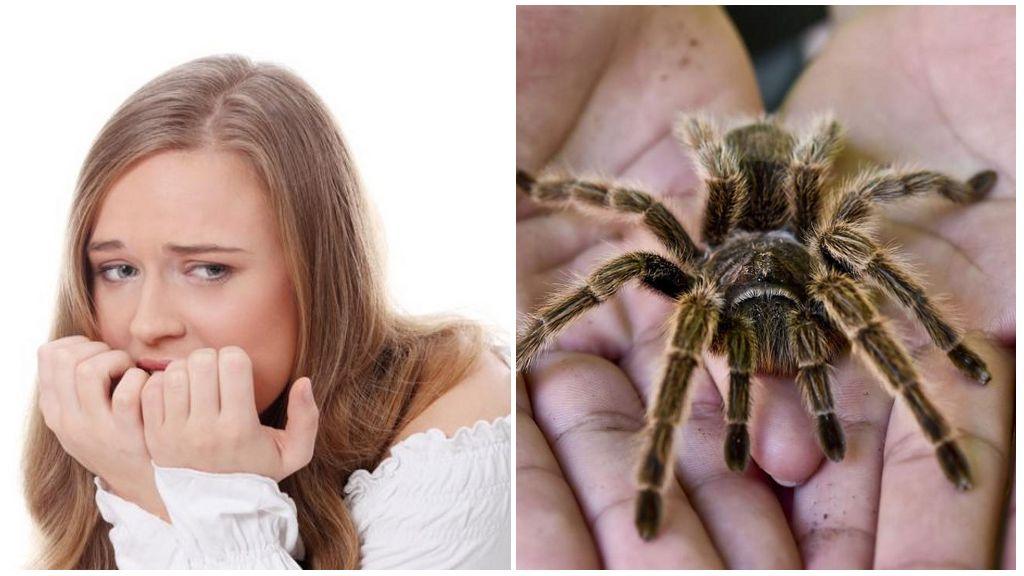 Как называется боязнь пауков (фобия) и методы лечения