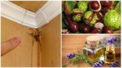Народные методы борьбы с пауками