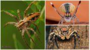 Виды безопасных пауков