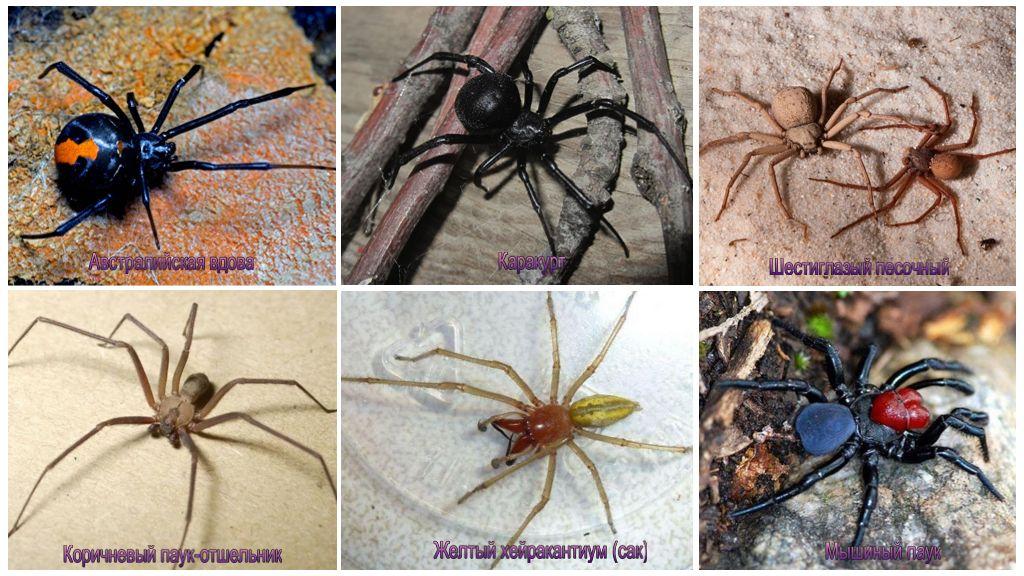 Самые страшные пауки
