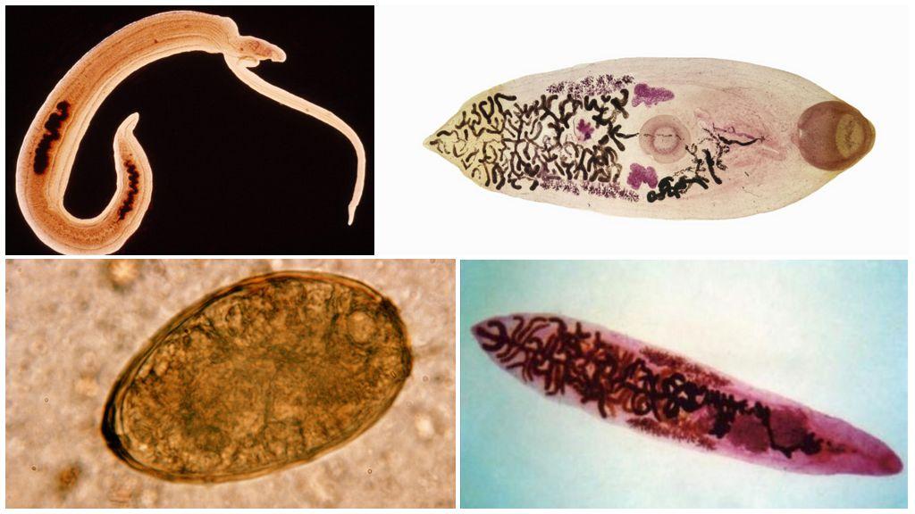 Виды паразитов