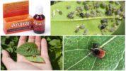 Препарат Алатар от насекомых
