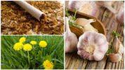 Народные рецепты от белокрылки