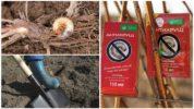 Способы борьбы с личинками