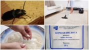 Борьба с жуками в доме