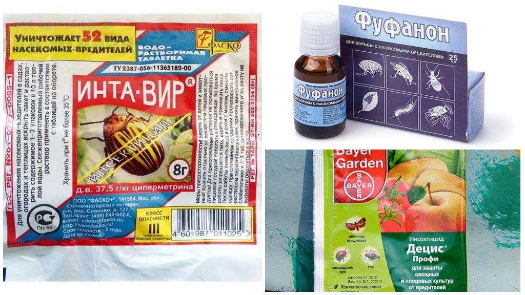 Инсектициды для борьбы с вредителем