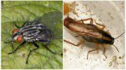 Серая мясная муха и рыжий таракан