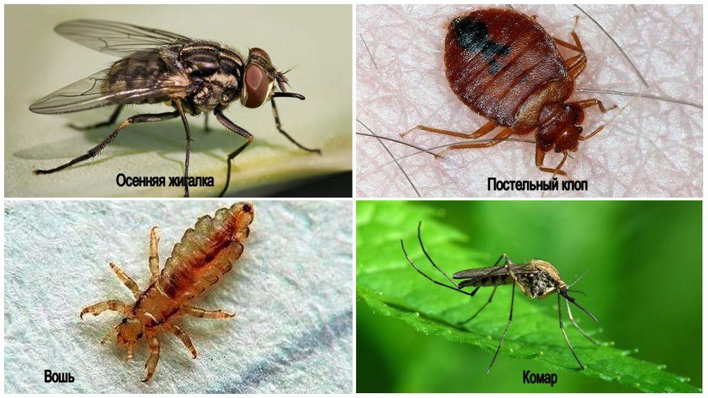 Опасные насекомые