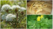 Растения, отпугивающие клеща варроа