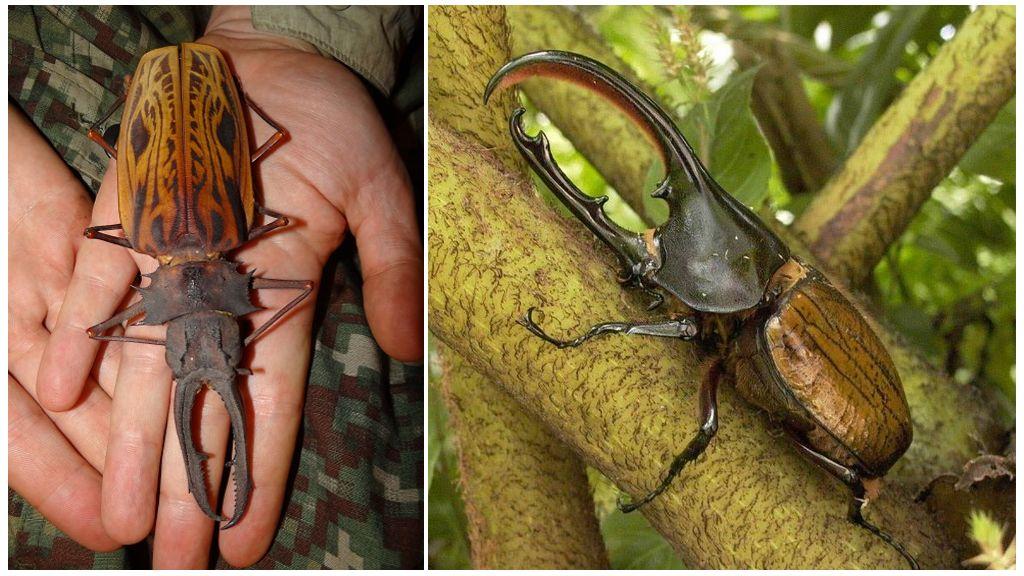 Самые противные насекомые в мире
