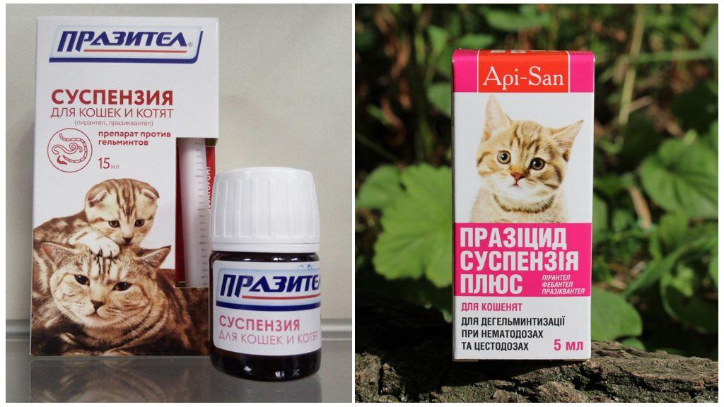 Суспензии от глистов для кошек