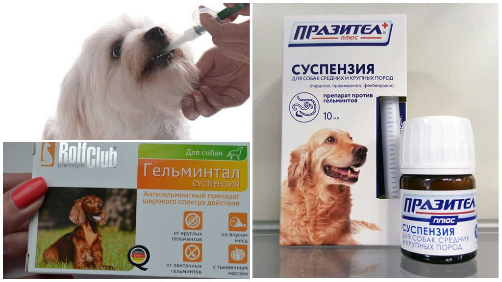 Препараты от глистов для собак