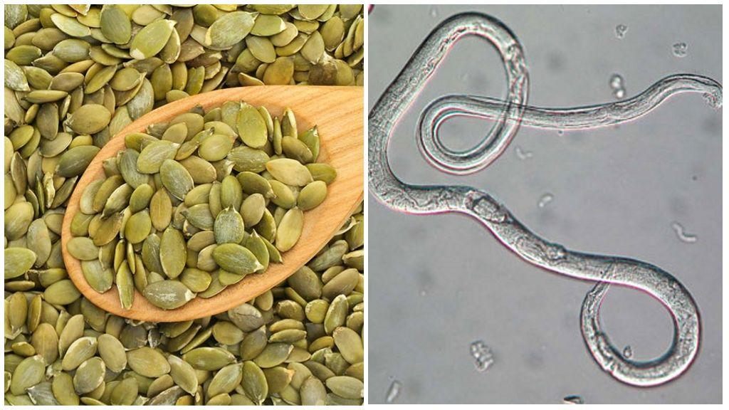 Тыквенные семечки от глистов и других паразитов