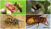 Жалящие насекомые