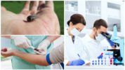 Анализ крови после укуса клеща