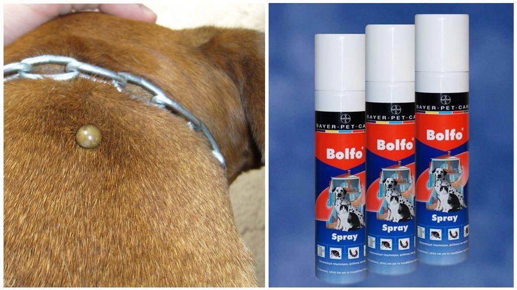 Спрей Больфо от клещей для собак
