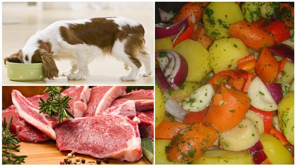 Рацион при панкреатите у собак