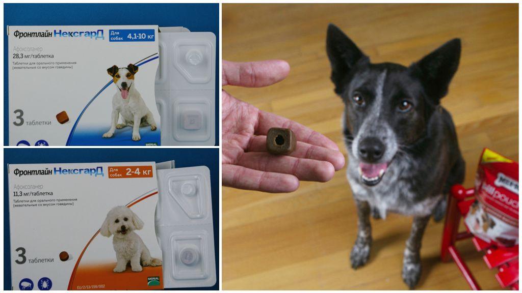 Таблетки Фронтлайн Нексгард для собак