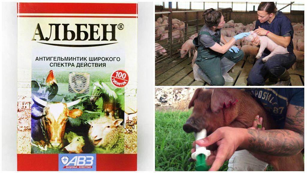 Лечение свиней Альбеном