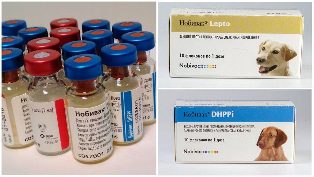 Прививка для собак Нобивак