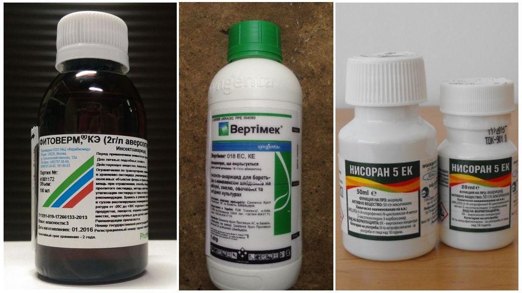 Препараты для борьбы с панцирными клещами