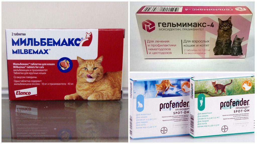 Препараты для лечения беременной кошки
