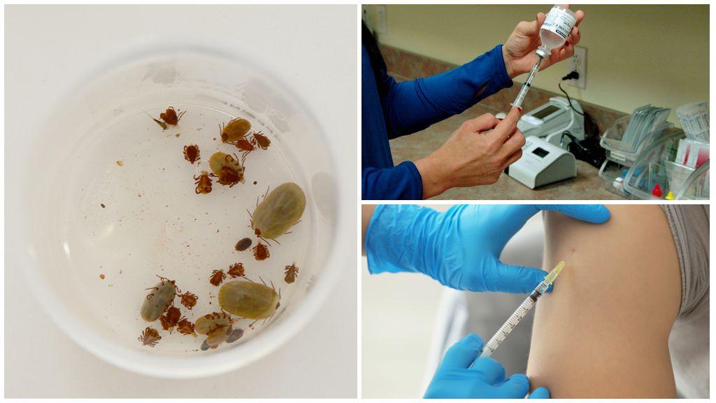Где бесплатно или платно сделать прививку от клещевого энцефалита в Санкт-Петербурге