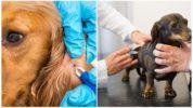 Прививка для собак от клещей