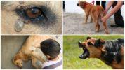 Признаки боррелиоза у собак