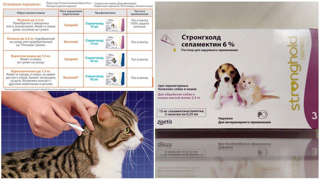 Капли Стронгхолд для кошек и собак