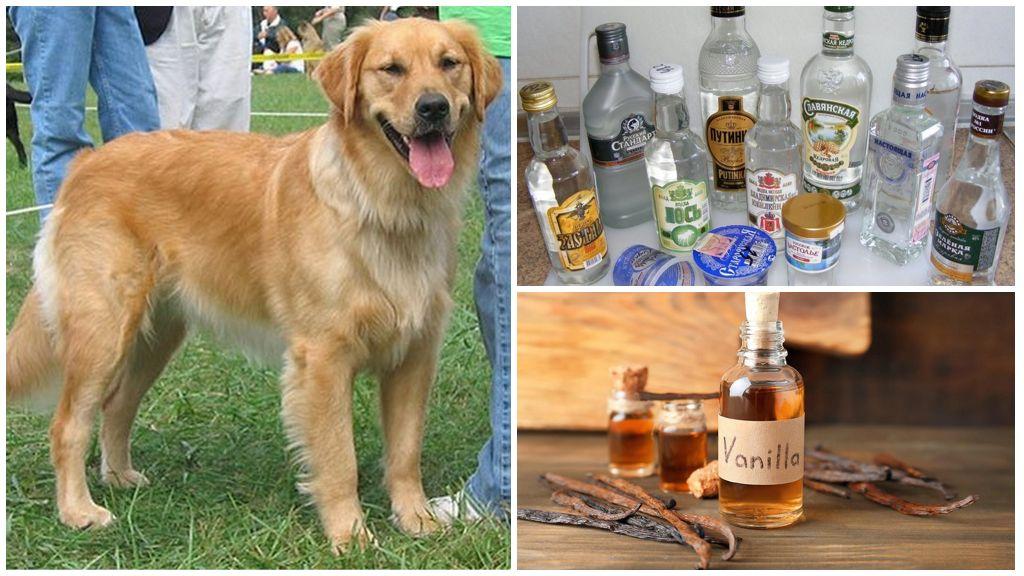 Водка с ванилином от клещей для собак