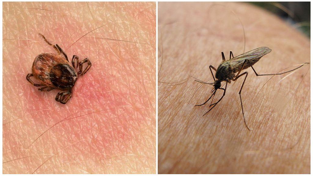 Укус клеща и комара