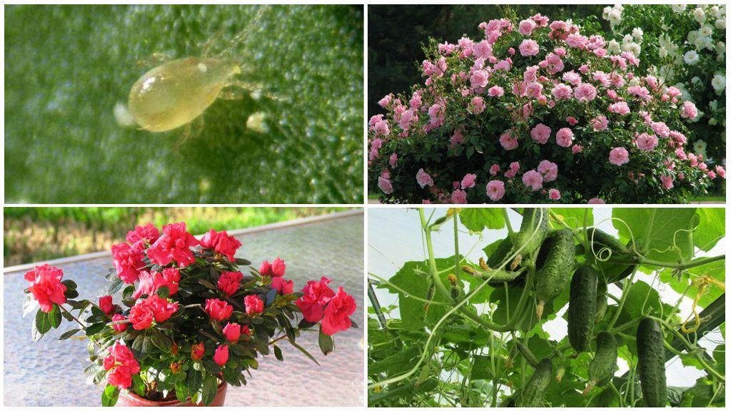 Растения на которых обитает клещ