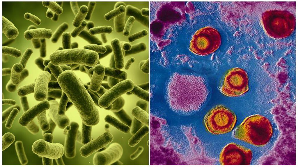 Бактерии-паразиты