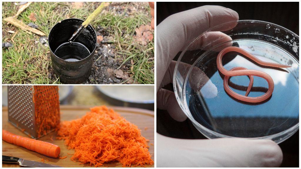 Морковь с дегтем от паразитов