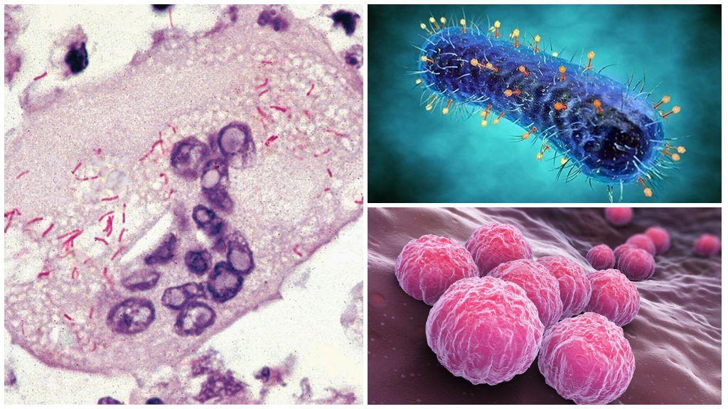 Облигатные паразиты: риккетсии, хламидии, вирусы