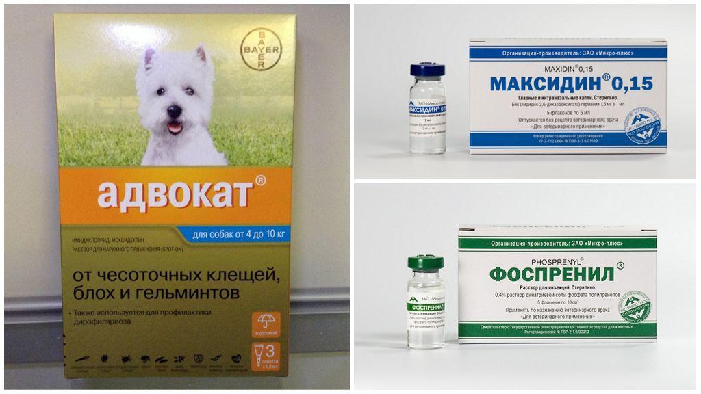 Лечение подкожного клеща у животных