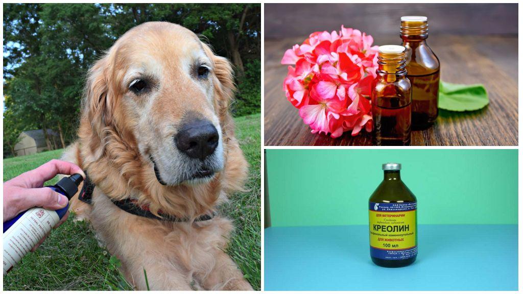 Народные рецепты от клещей для собак