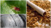 Табак и известь от паутинного клеща