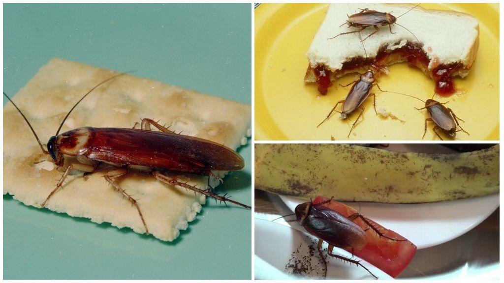 Еда таракана