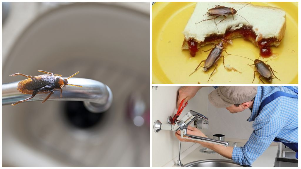 Отсутствие пищи и воды для тараканов