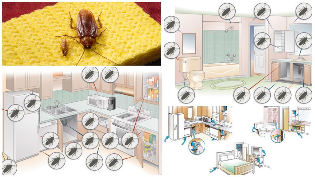 Места обитания тараканов