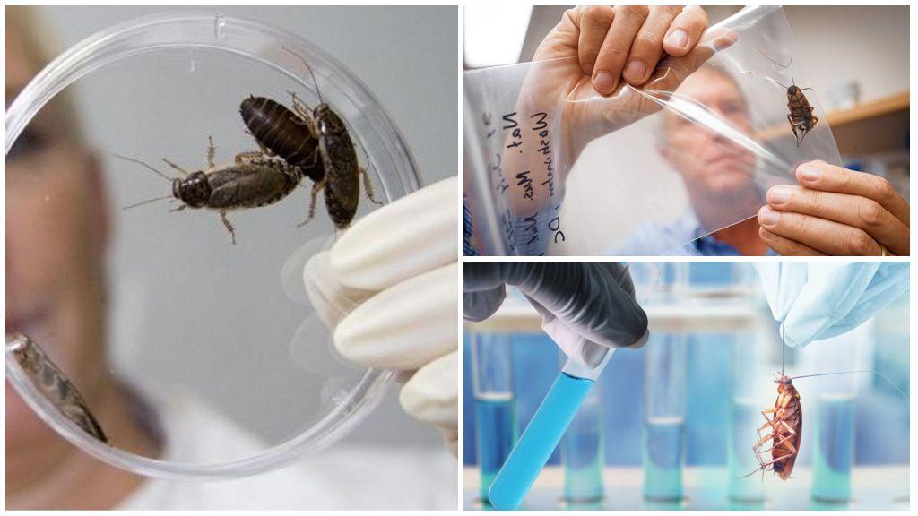 Кто изучает тараканов