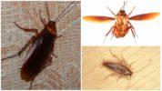 Таракан и его полет