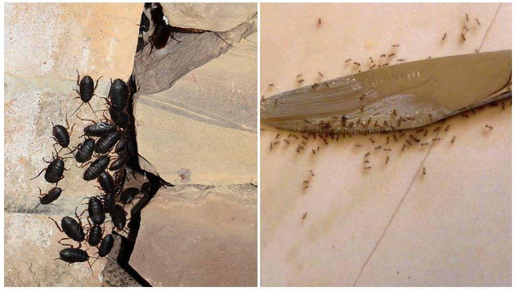 Муравьи и тараканы