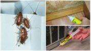 Гель-шприц от тараканов